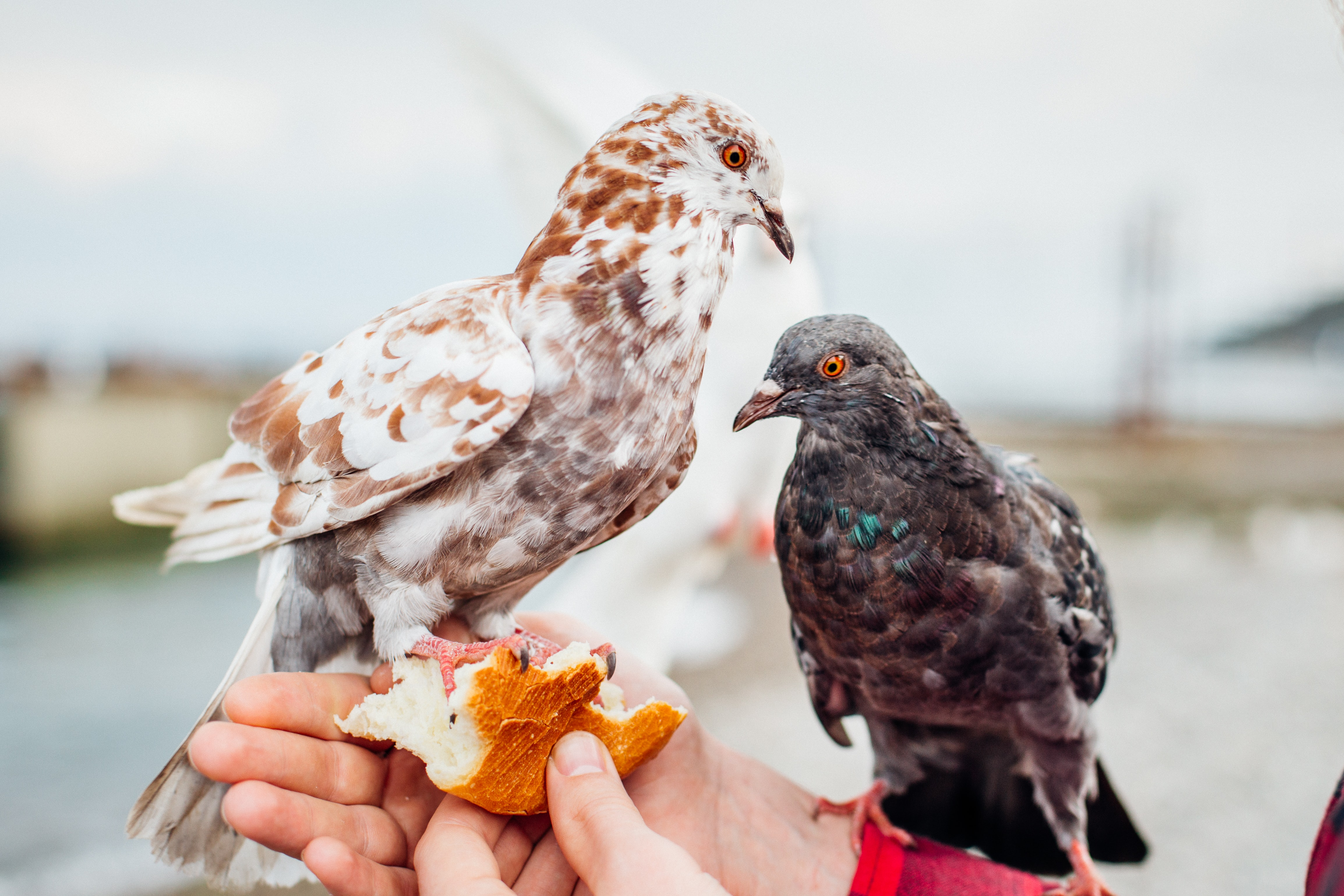 two black and brown birds on person's hand