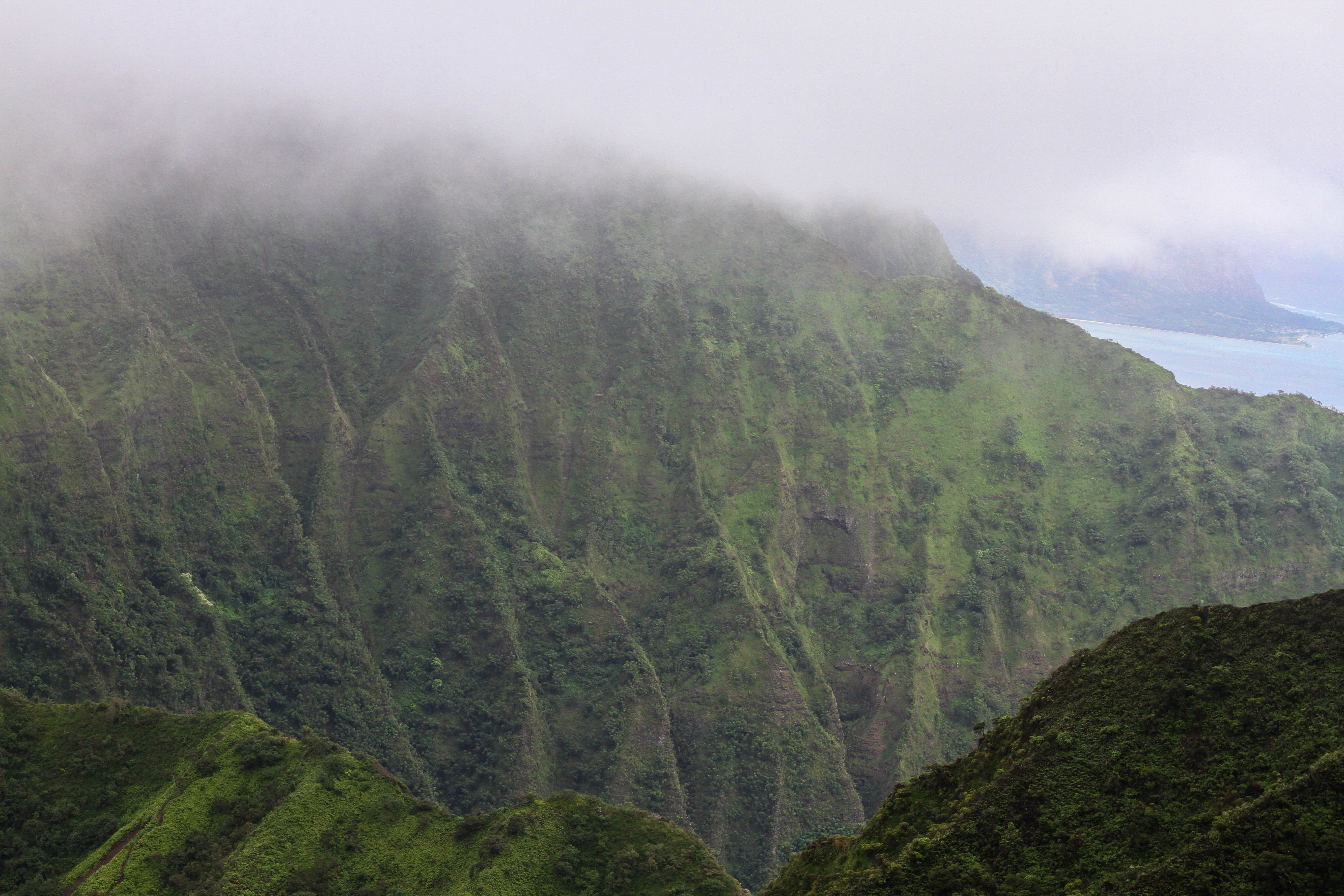 Fog over top a forest in Hawaii.