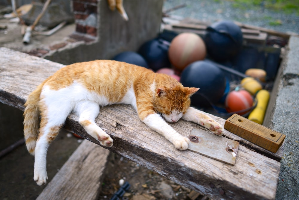orange tabby cat lying on brown wooden plank during daytime photography