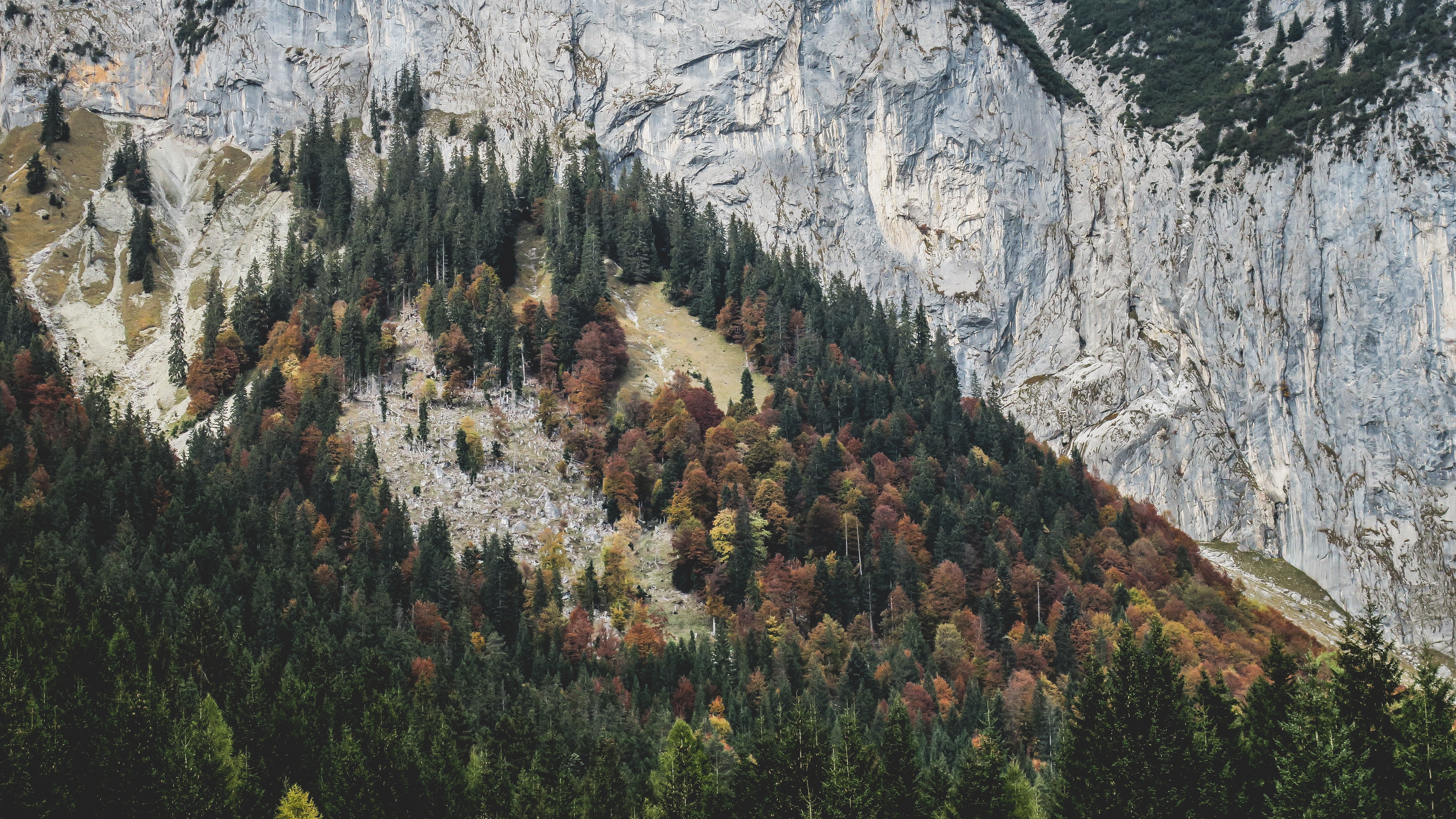Trees in autumn colors covering a slope by a rock face in Gasse