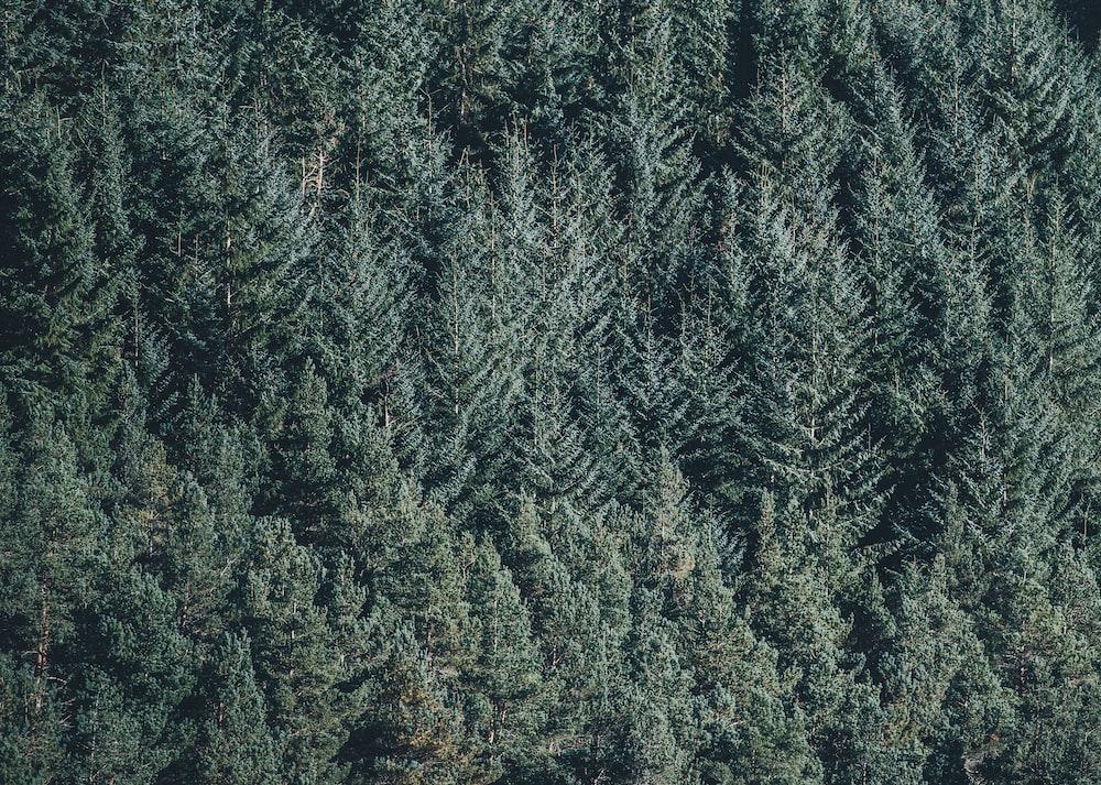 green trees photgraphy