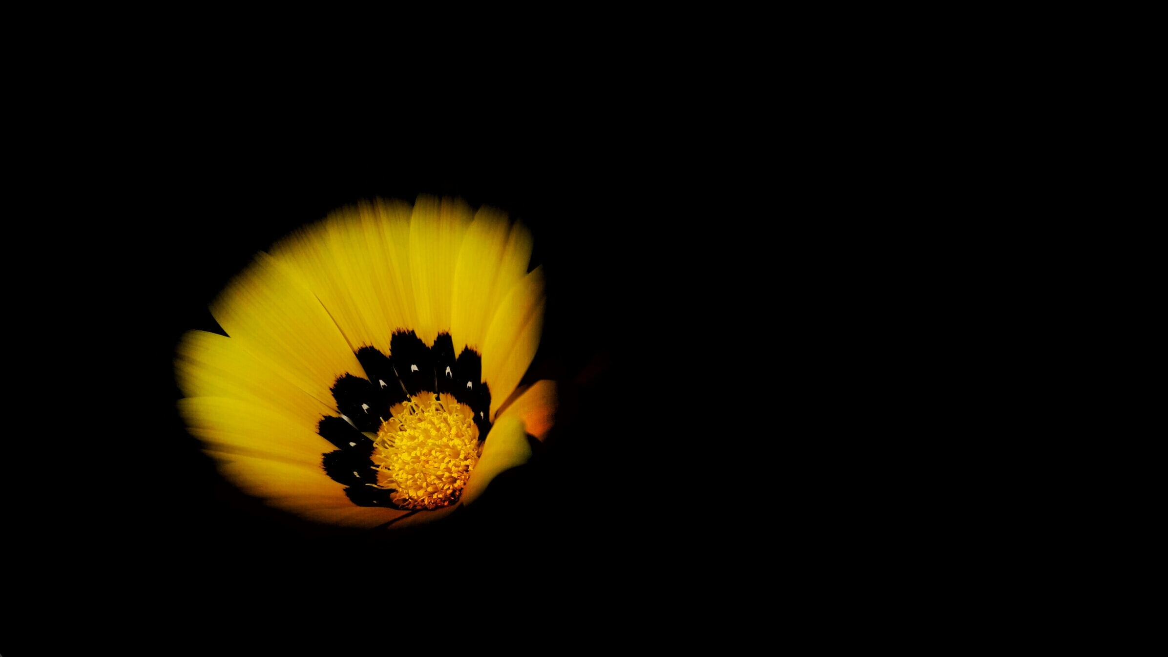 A close-up of a bright yellow flower against a black background