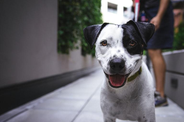 Dog Behaviour Training – The Best Way to Handle Dog Barking
