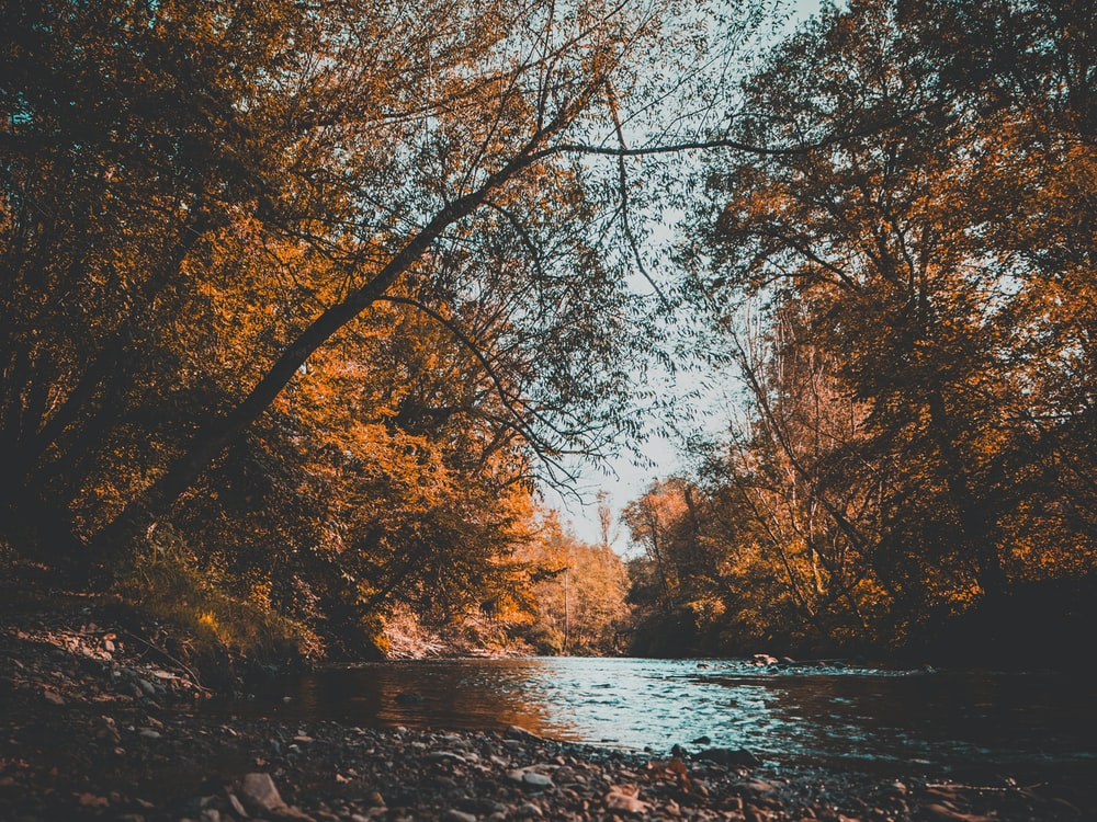 body of water surrounded of brown trees