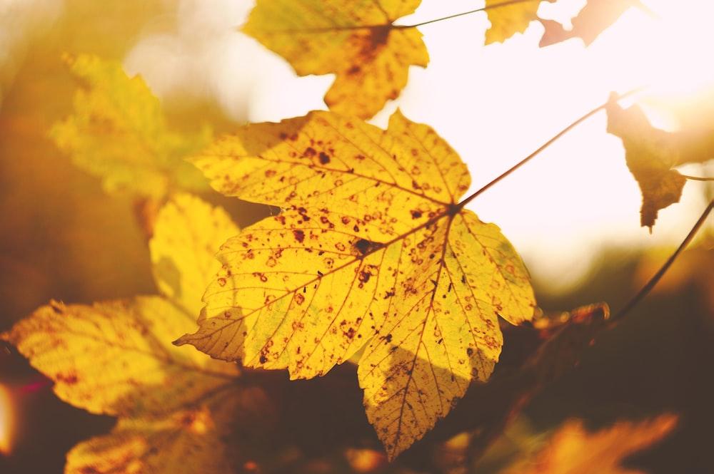 tilt-shift lens photo of yellow leaf