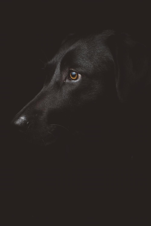 black dog photography