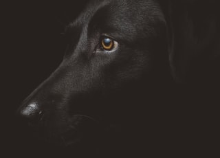 black dog photography
