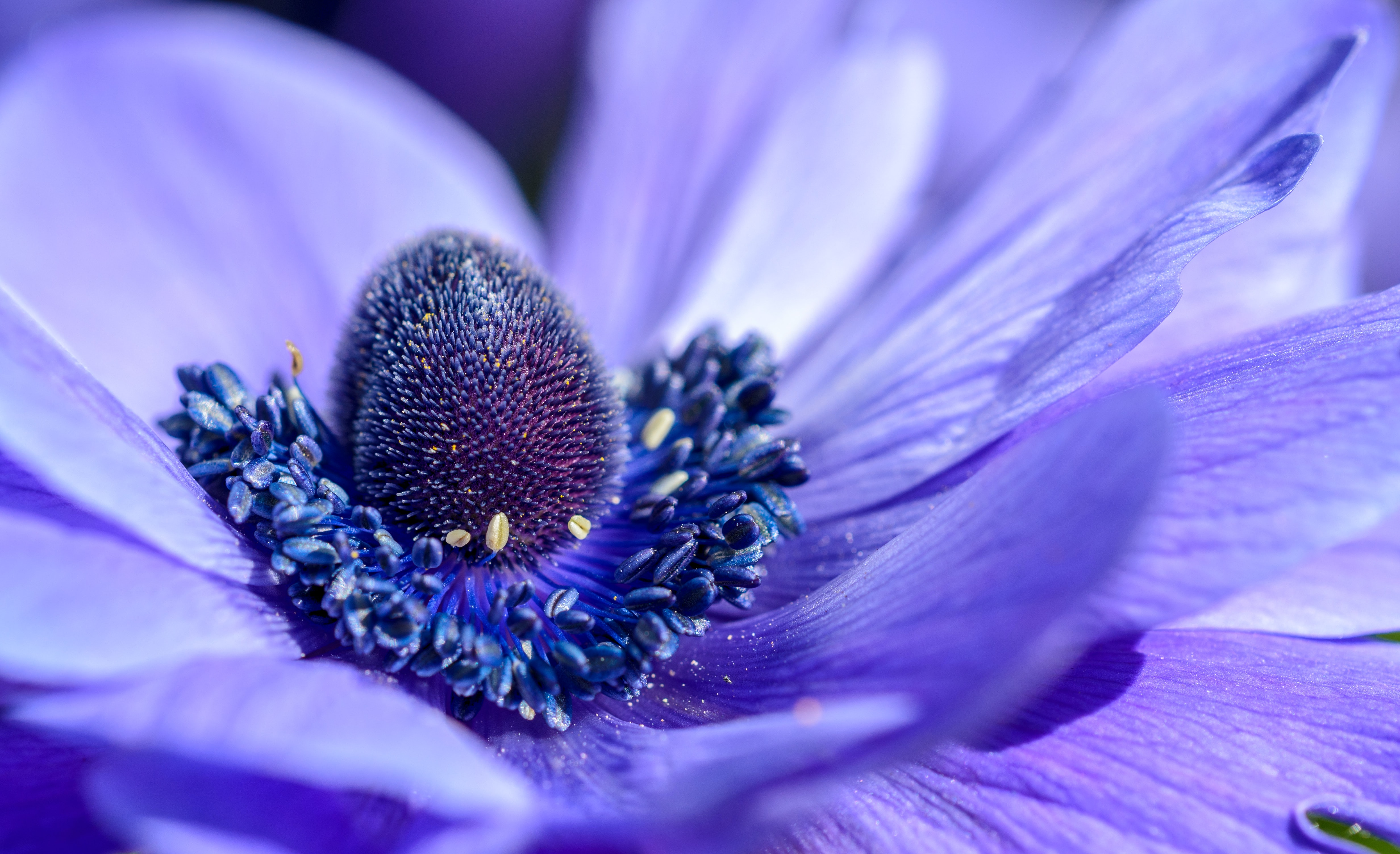 A macro shot of the center of a deep violet flower