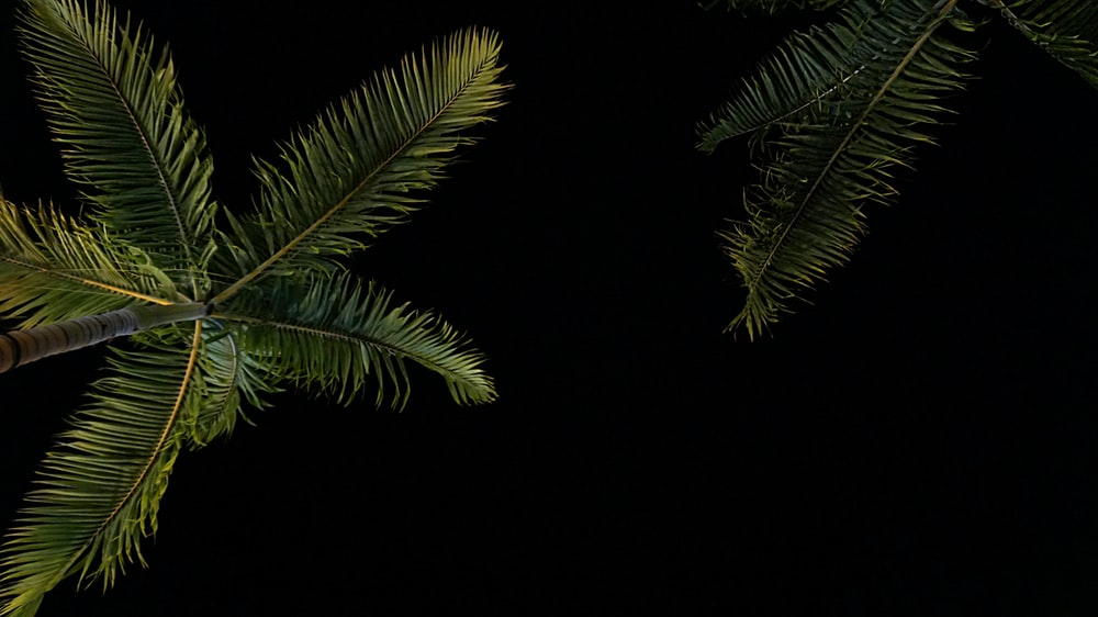 coconut tree during nighttime