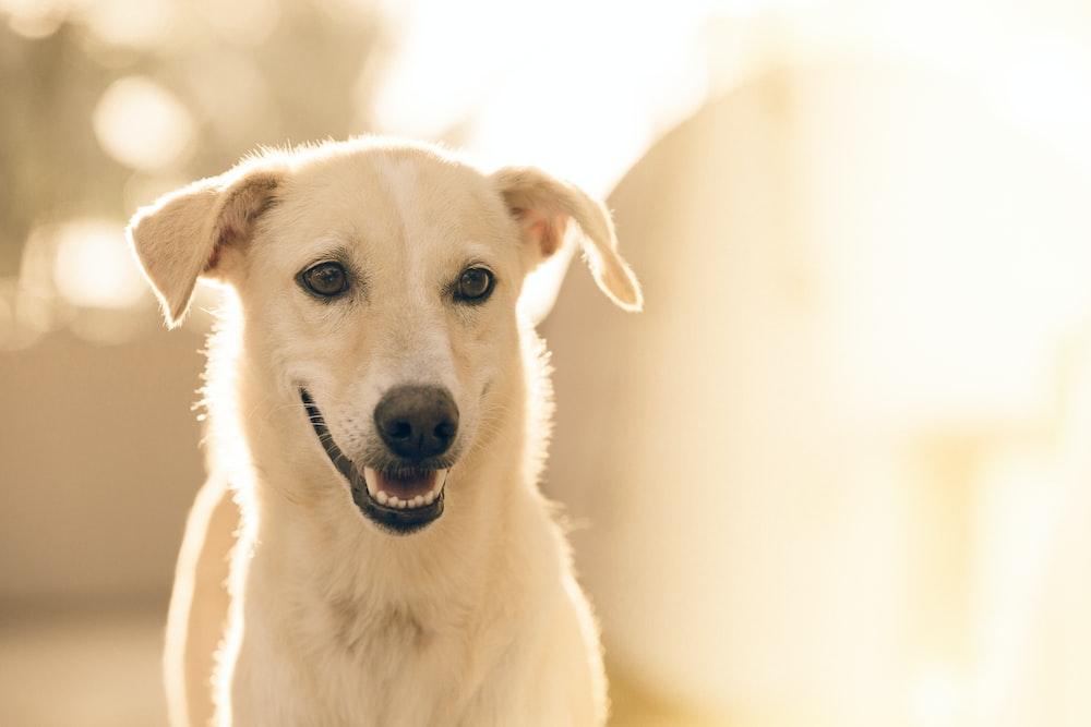 focus photography short-coated white dog