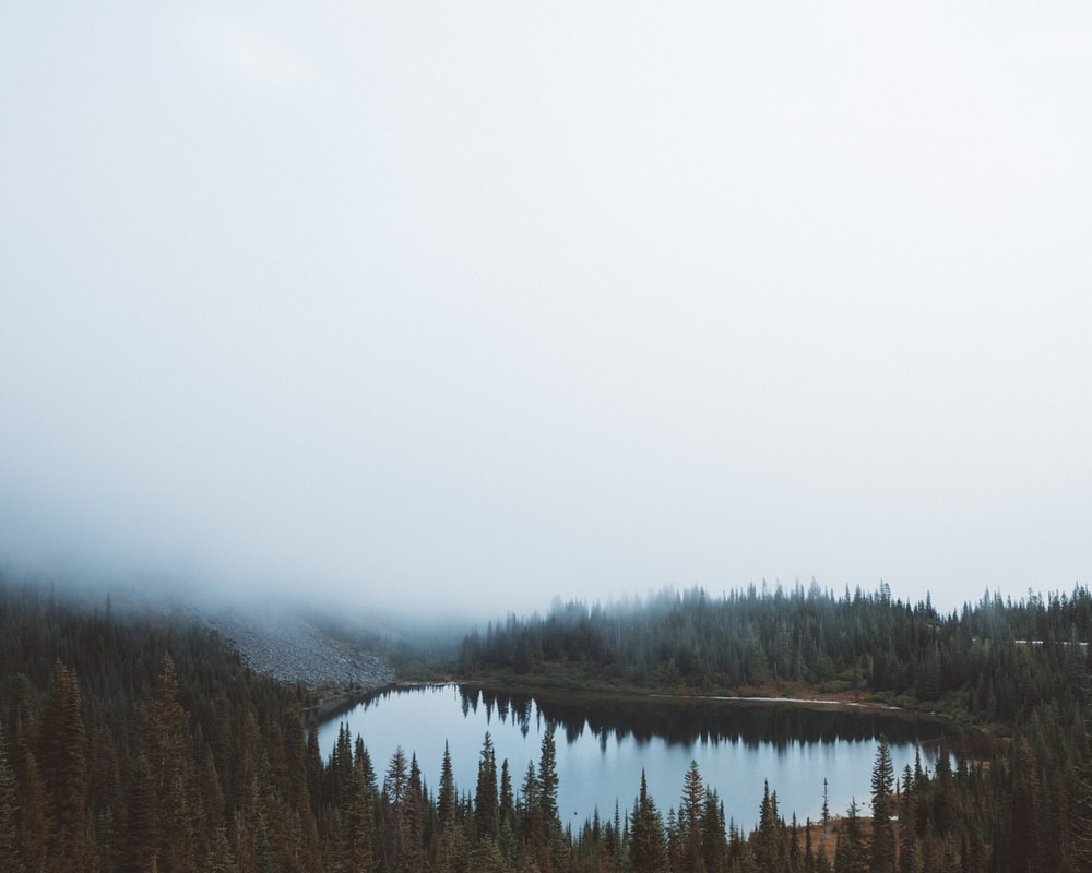 landscape photography of body of water between trees under foggy sky