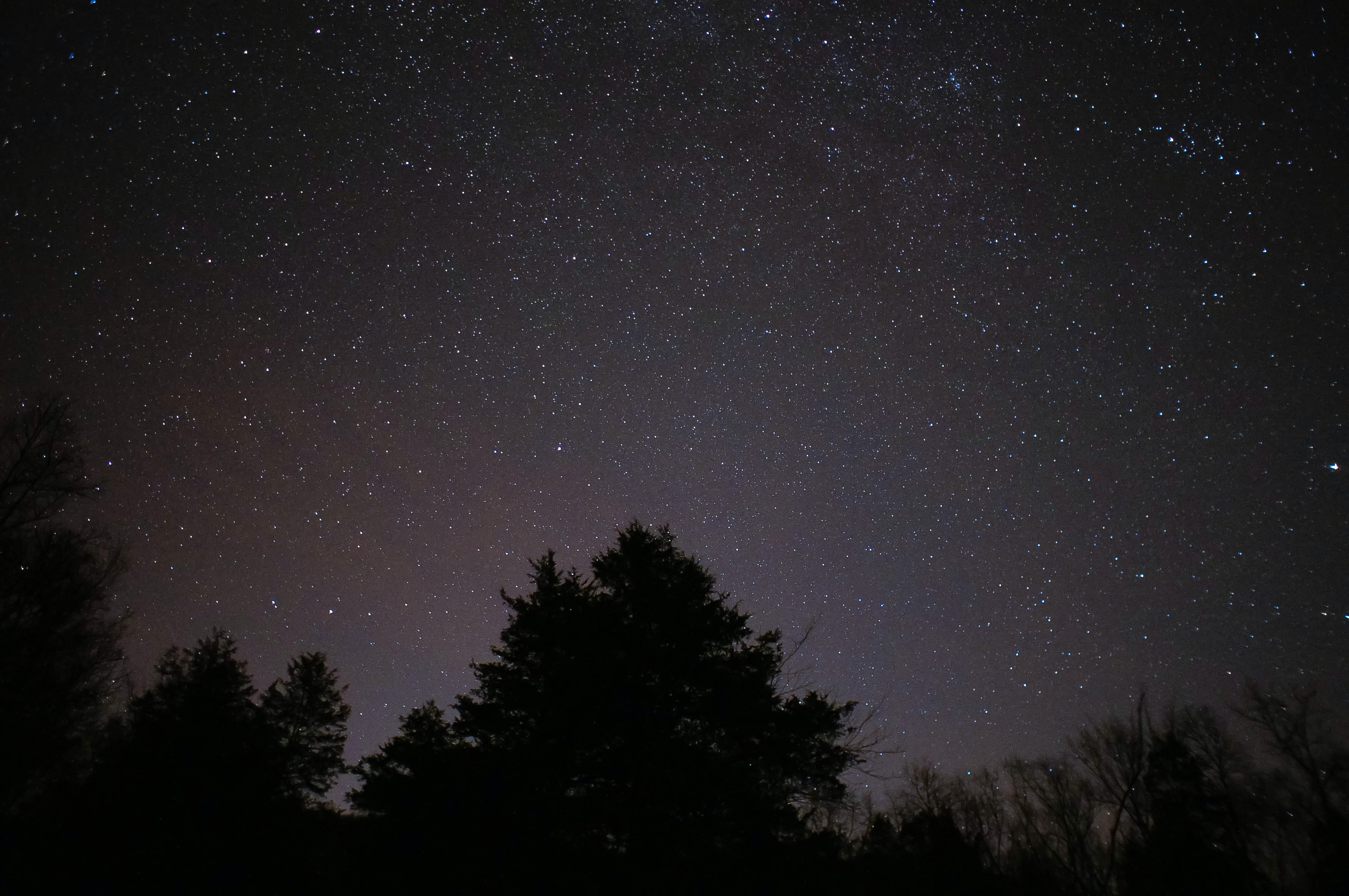 View in the night of trees and stars in space