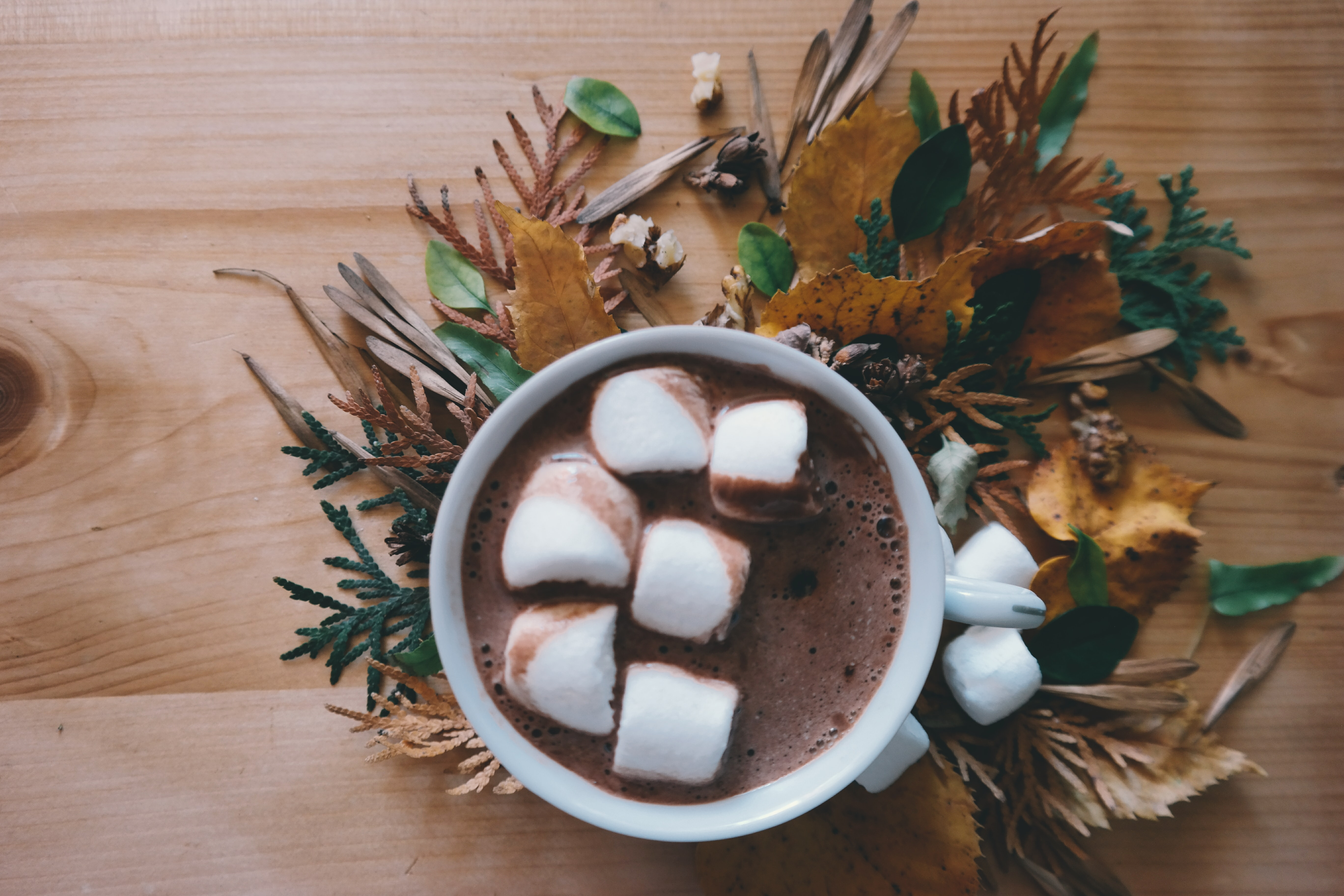A cup of hot chocolate with large marshmallows.