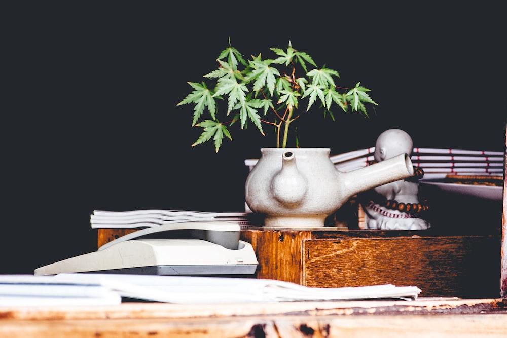 cannabis plant on white teapot vase