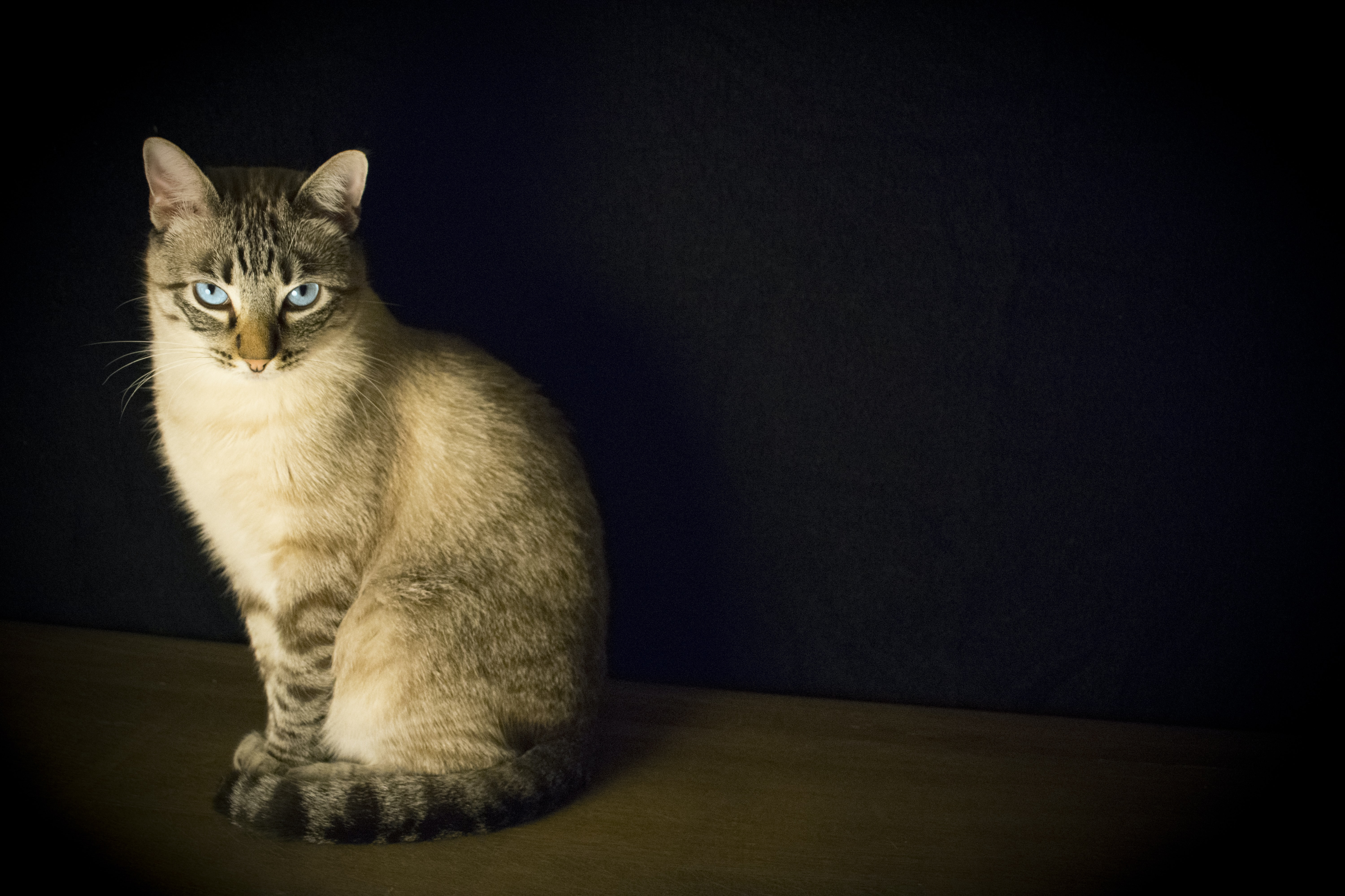 A cat sitting up staring at the camera, surrounded by a black background.