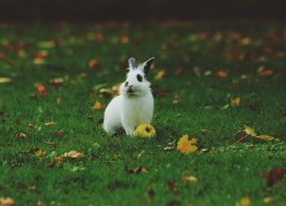 white rabbit standing on grass