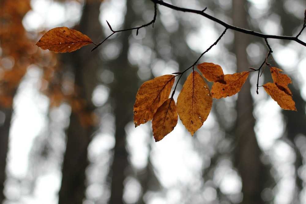 selective focus photography of brown leaf trees