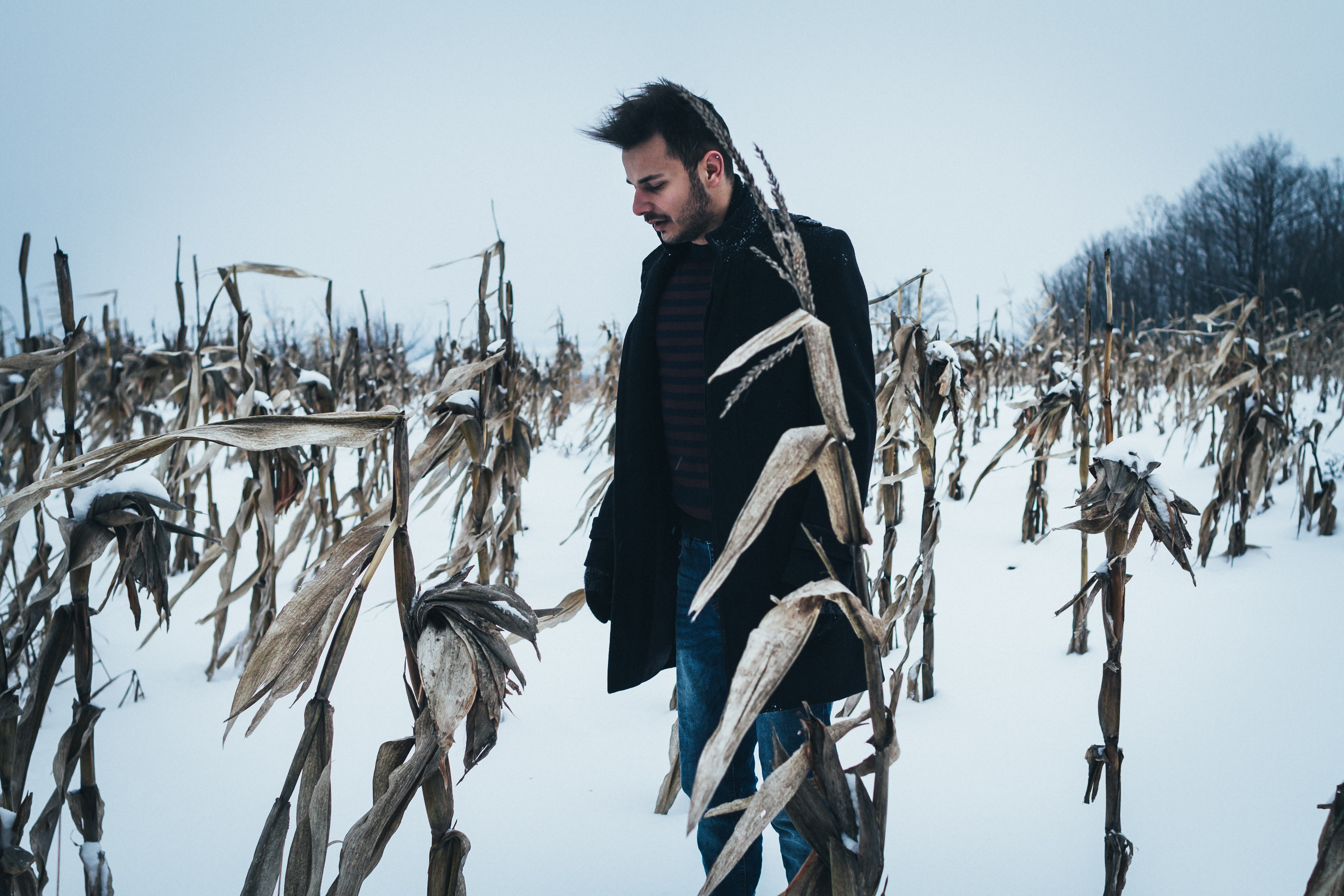 A man in a coat stands in a snowy cornfield in the winter