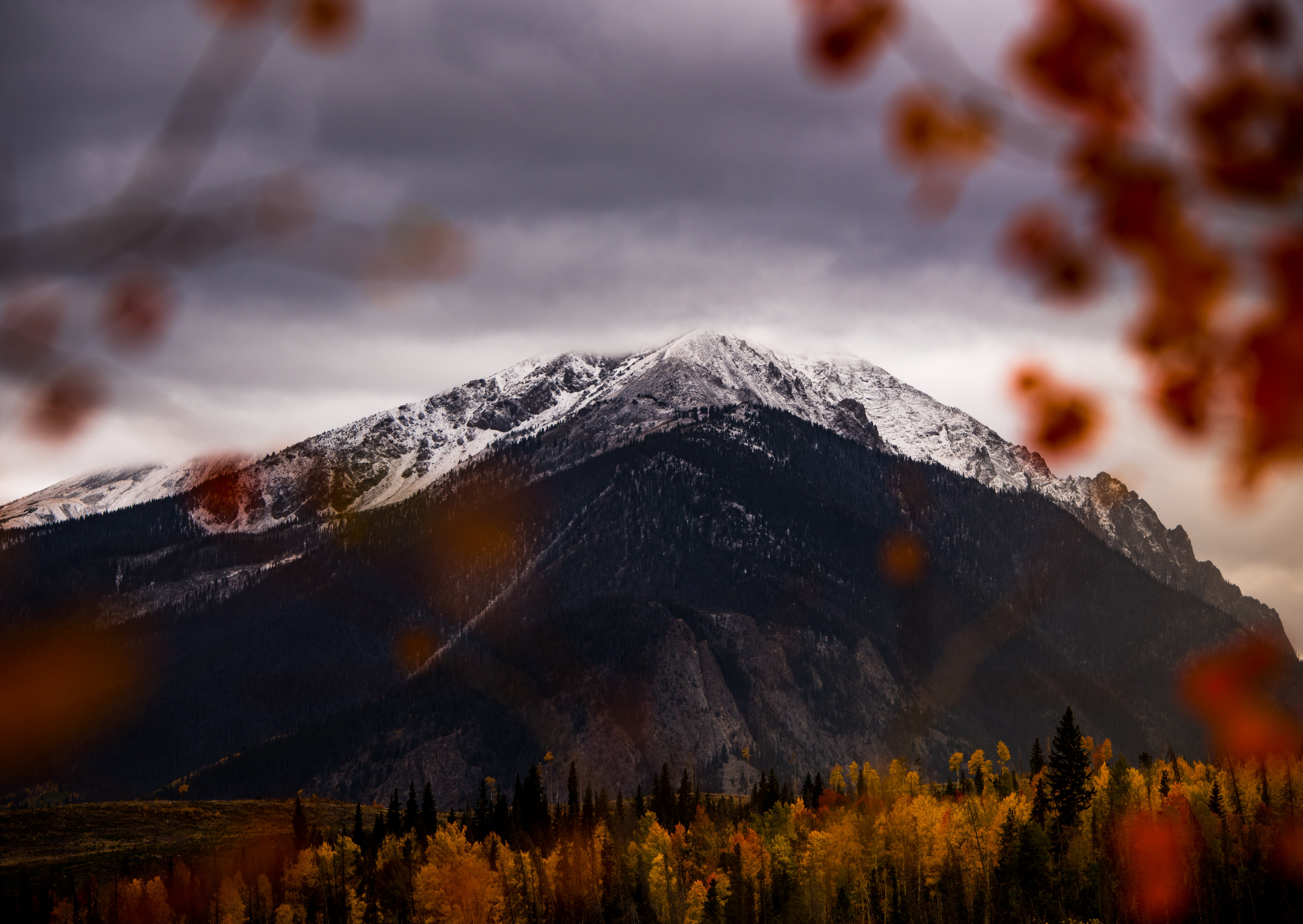 An autumn-colored forest at the foot of a tall snowy mountain in Silverthorne