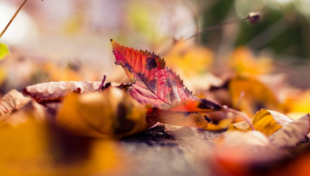 shallow focus photo of leaf