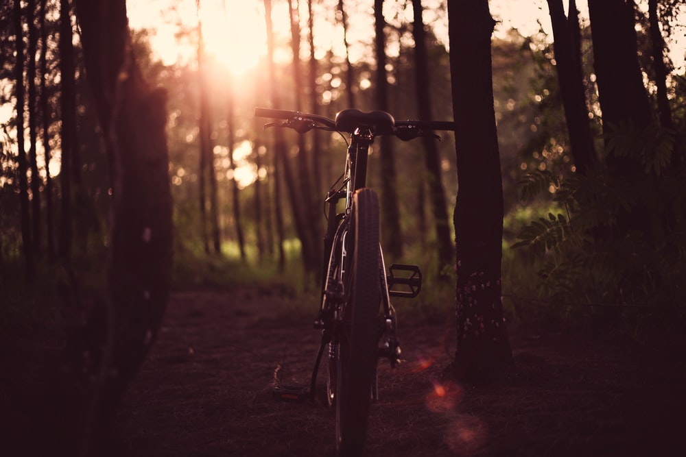bicycle between trees in sunset