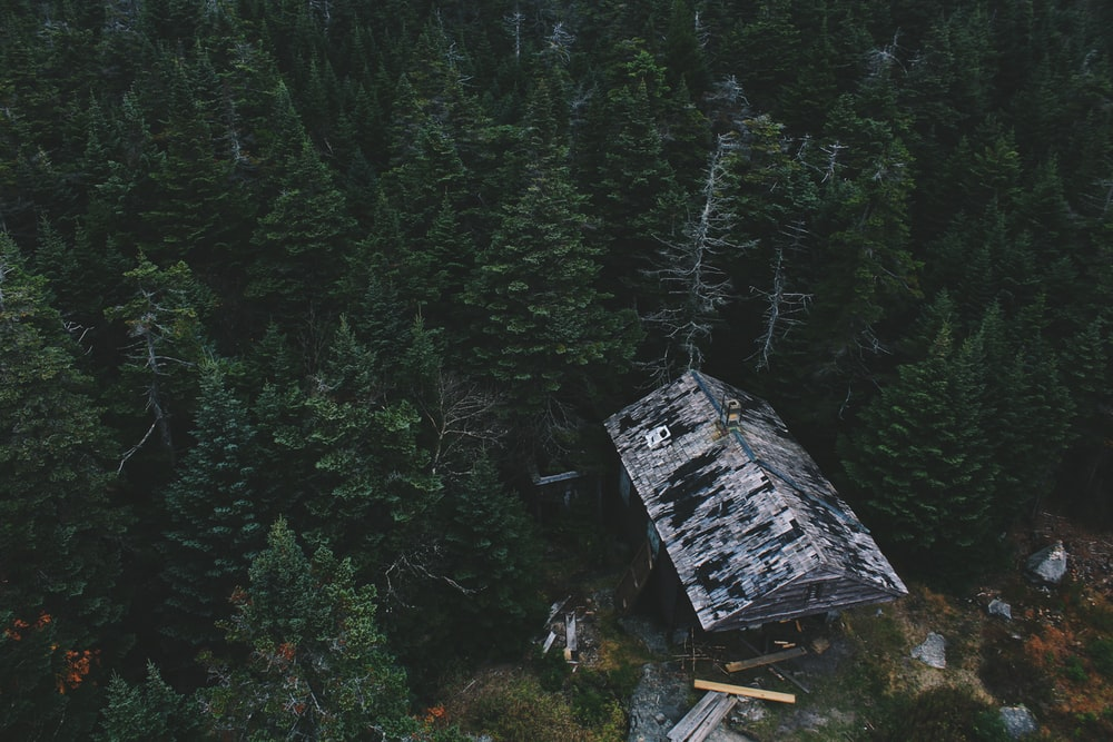 aerial photo of cabin on woods