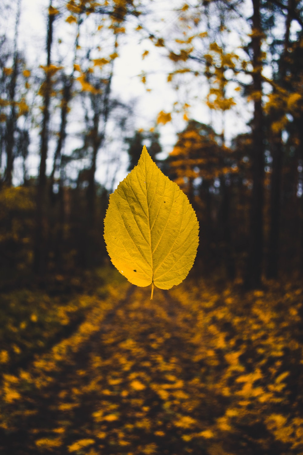 A yellow autumn leaf suspended in the air over the forest floor