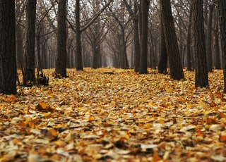 landscape of bald trees