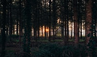 photo of forest view with sunlight passing thought trees