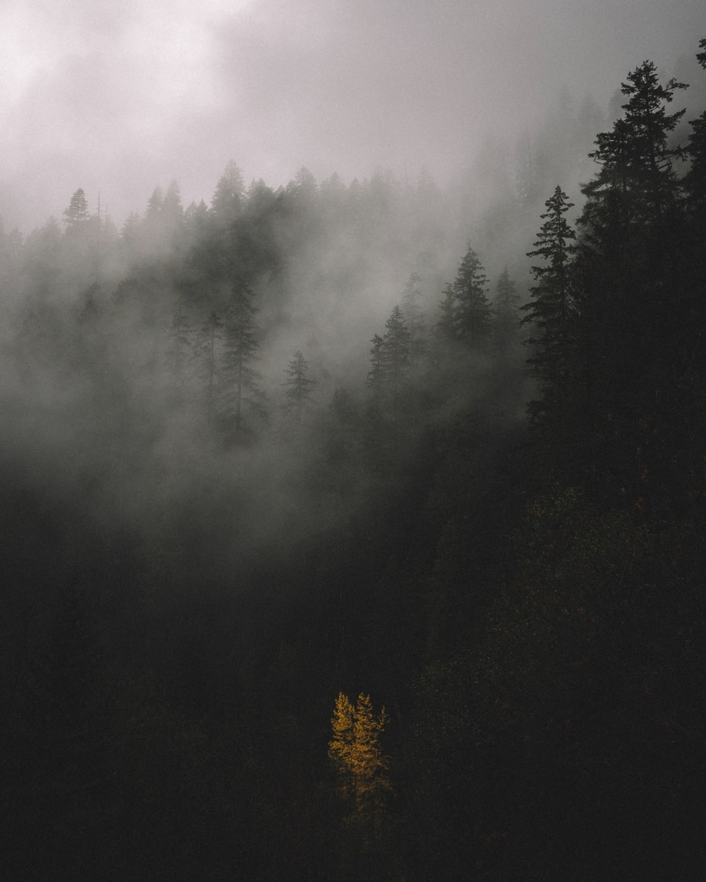 trees covered by fog