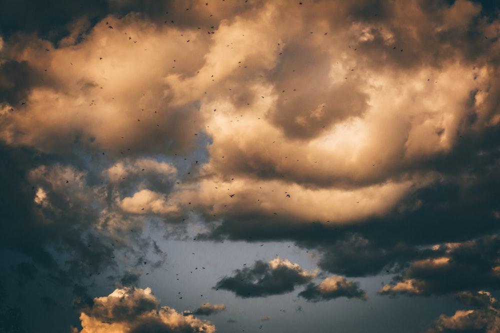 brown and gray skies