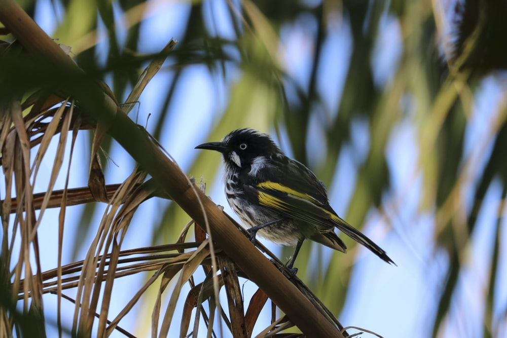 black and yellow bird sitting on brown tree branch