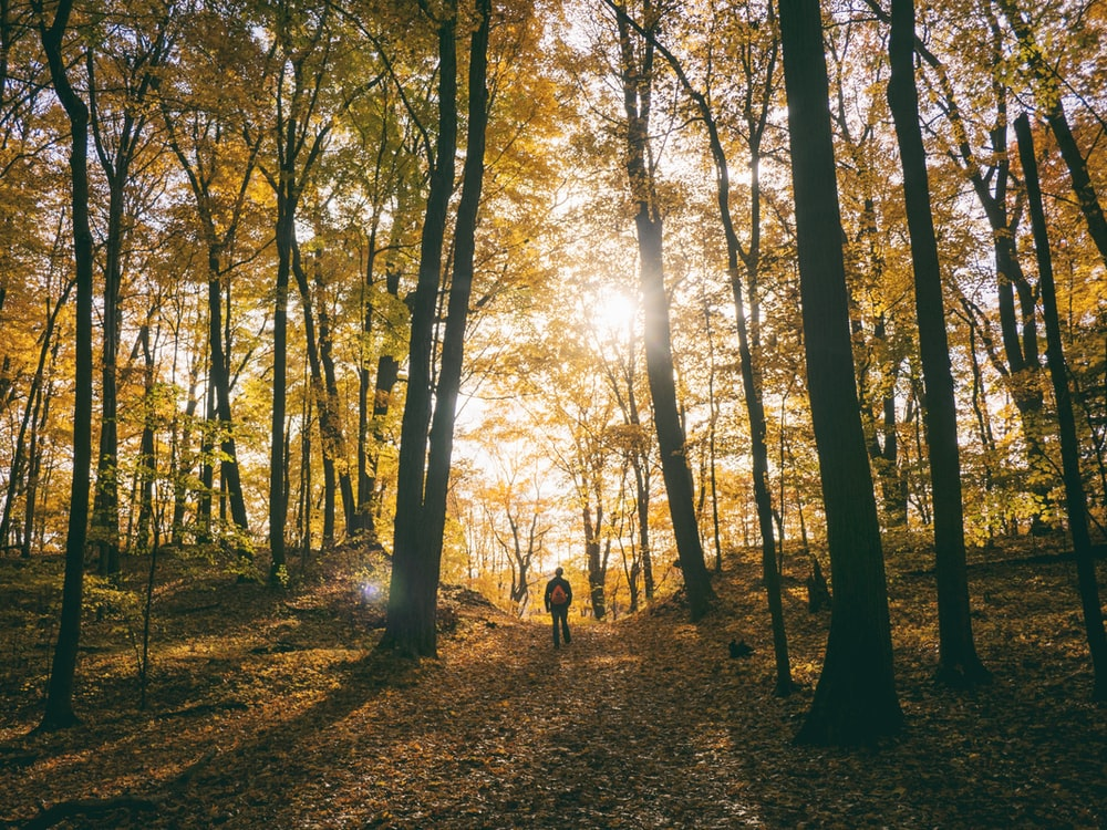 silhouette of man standing between trees facing sunlight