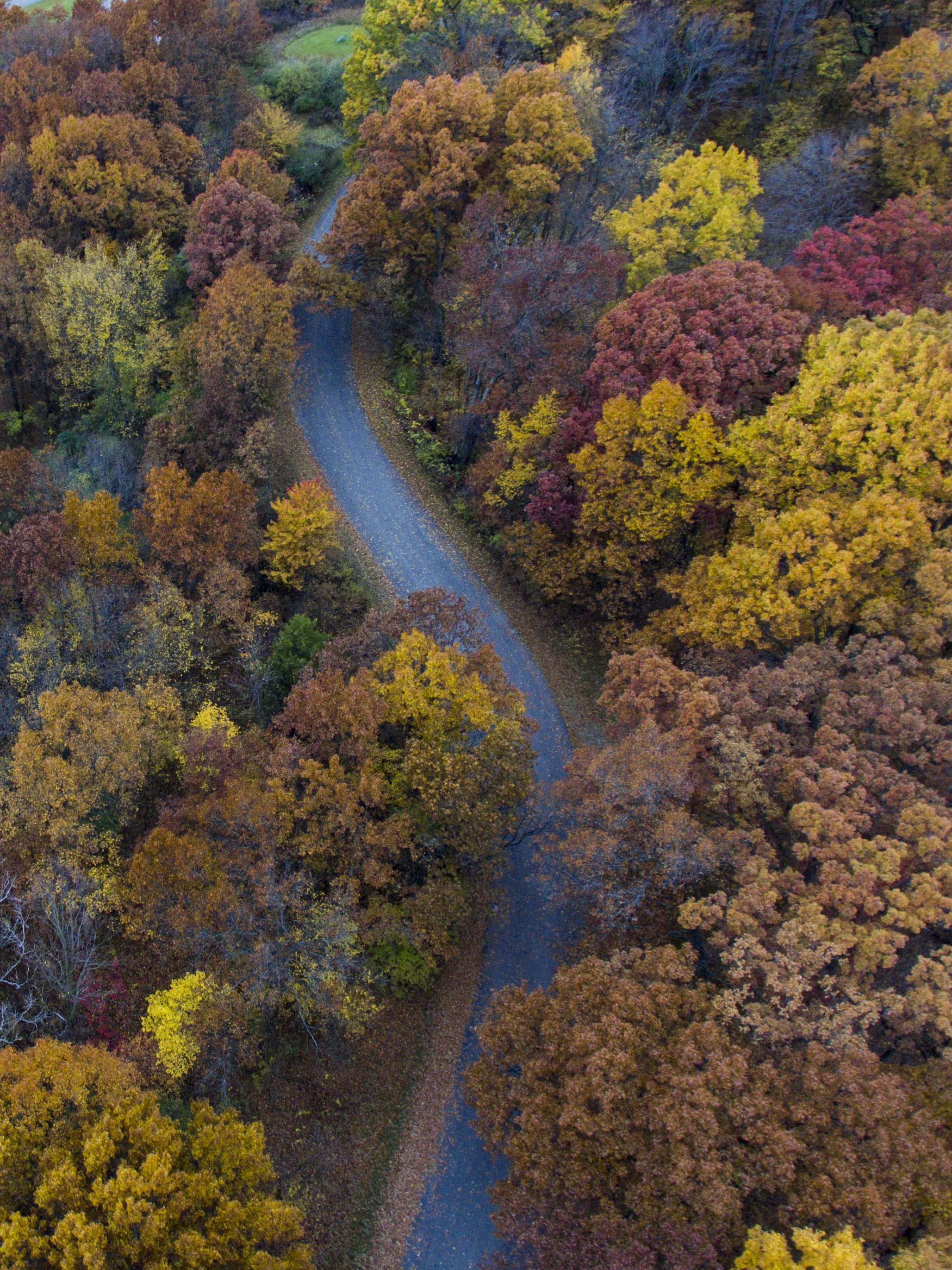 A drone shot of a curve in a road near autumn-colored trees