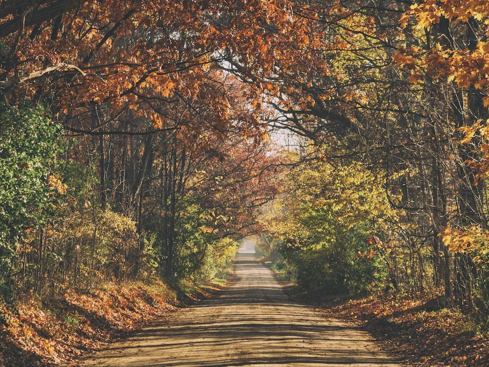 brown leaf trees during daytime