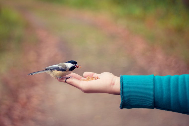 Photo of a small bird eating seeds from someone's hand, by Bonnie Kittle