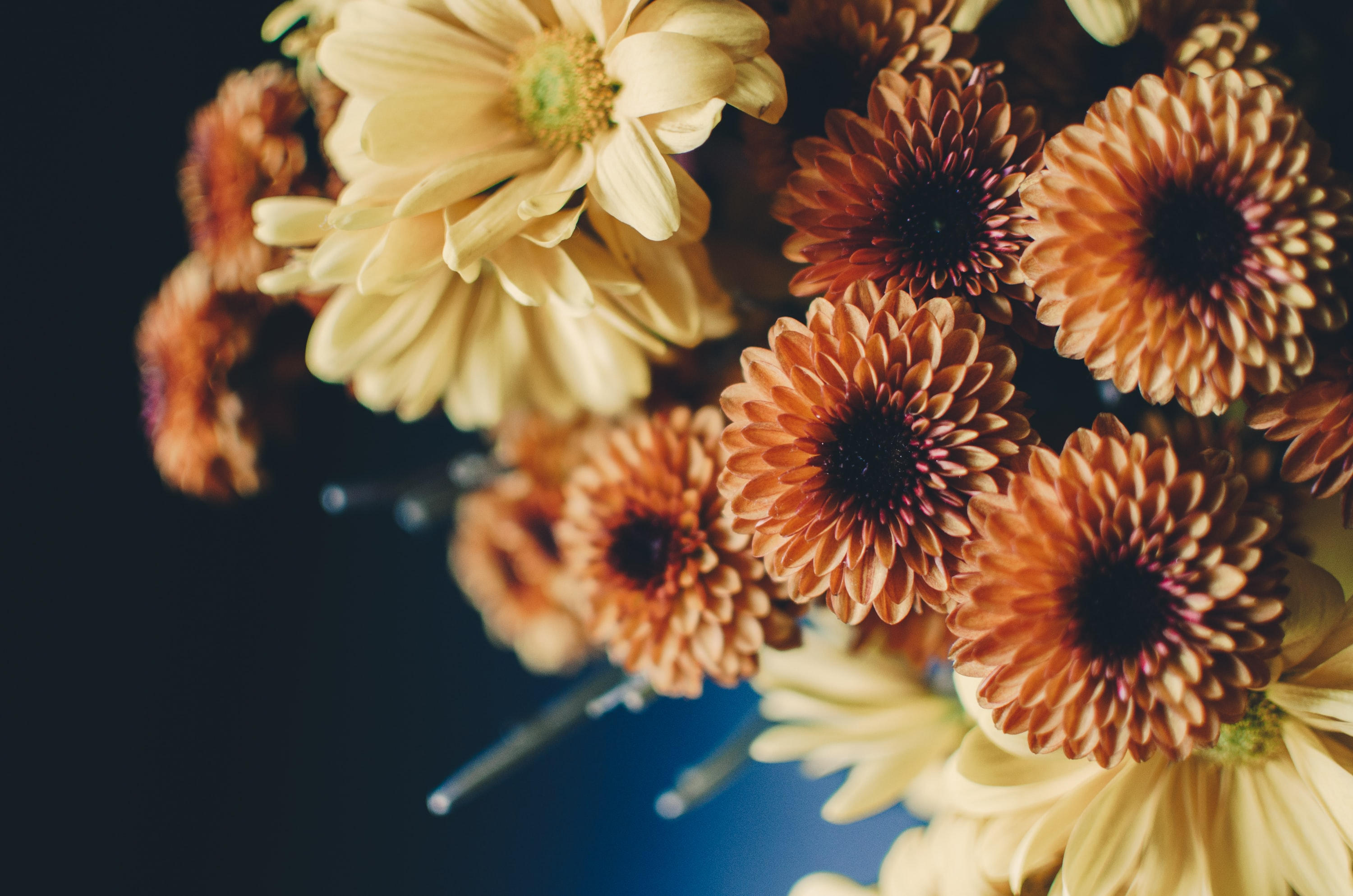 Close-up of orange dahlias and other yellow flowers