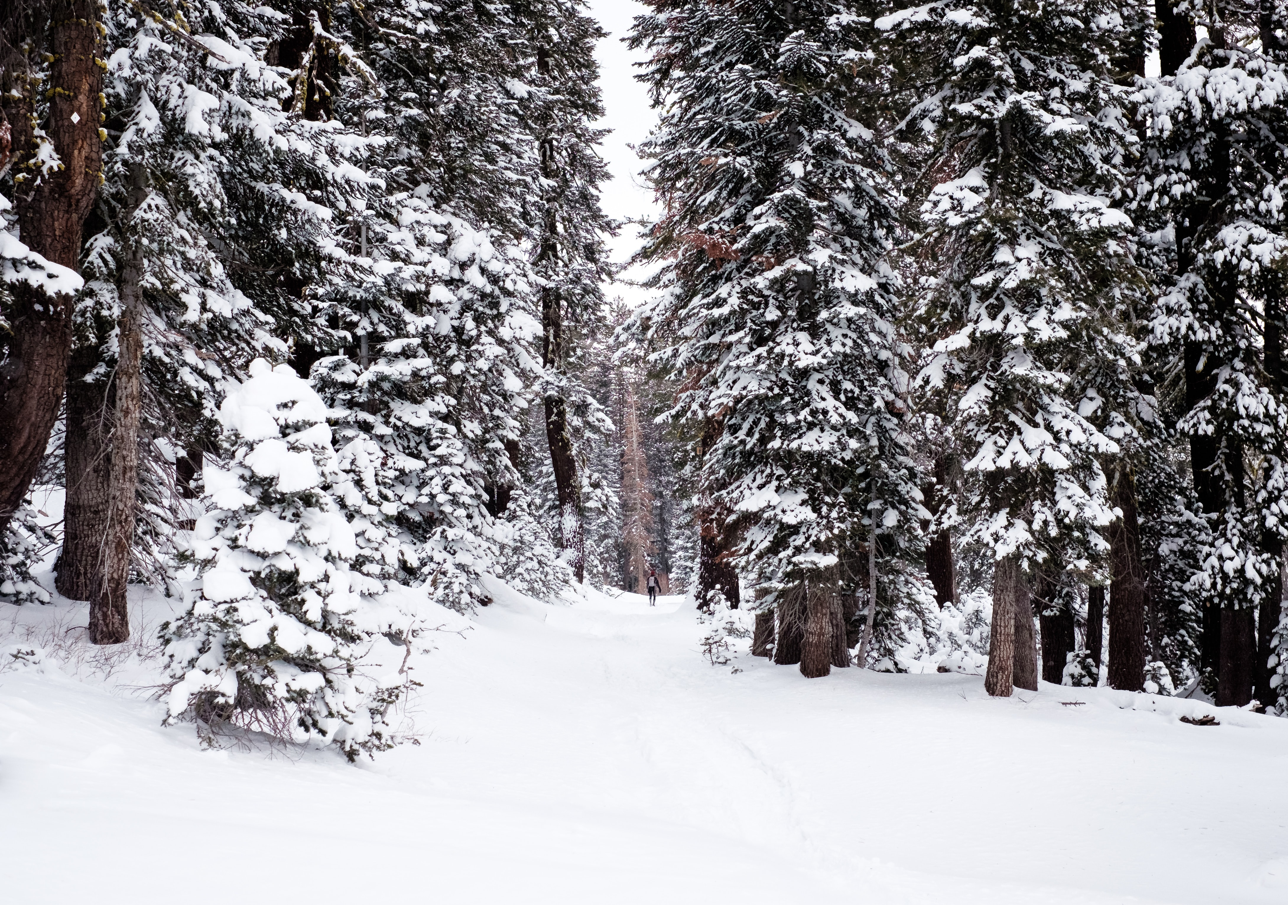 Heavily covered roads and trees in the winter at Lake Tahoe