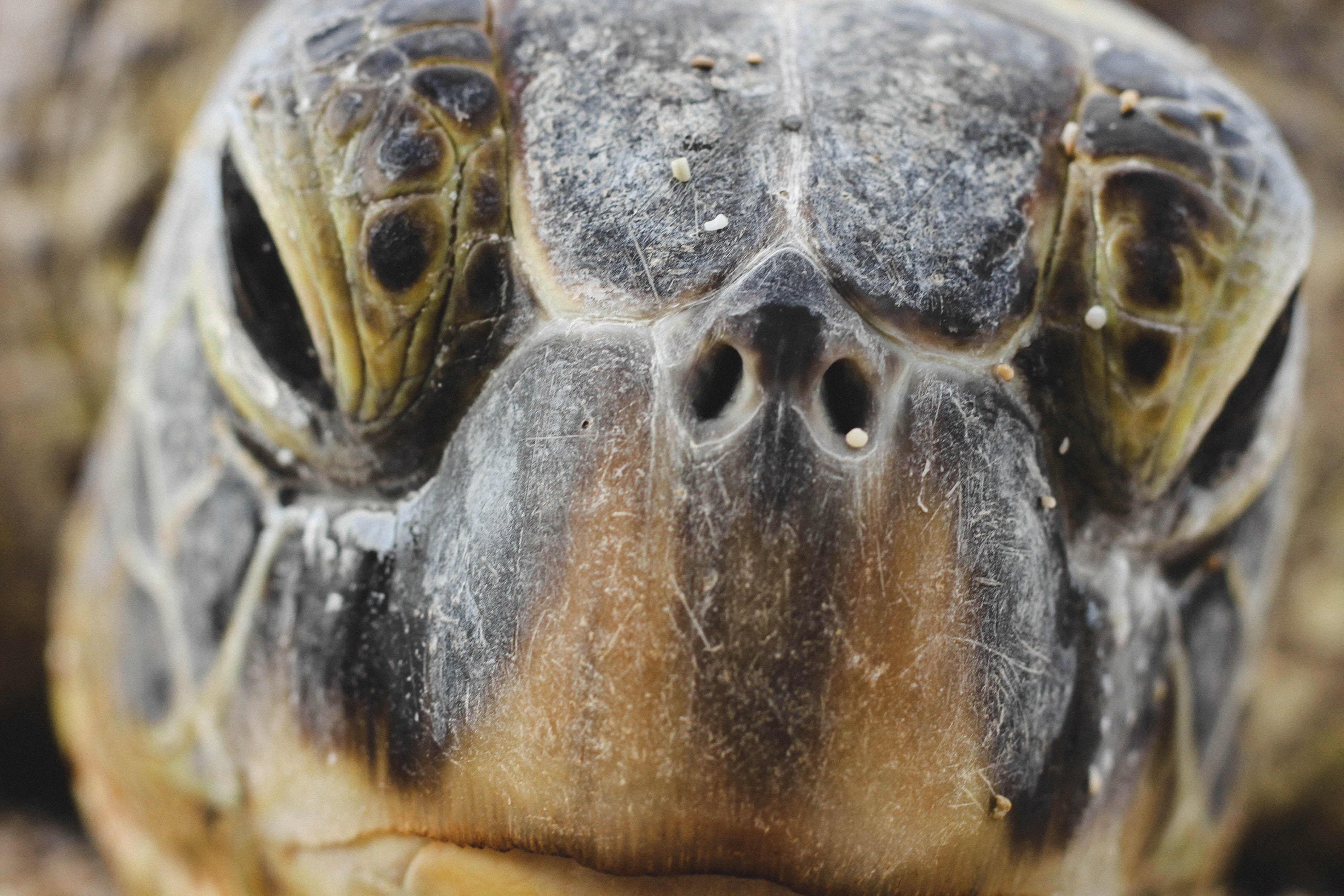 Closeup of an old turtle face
