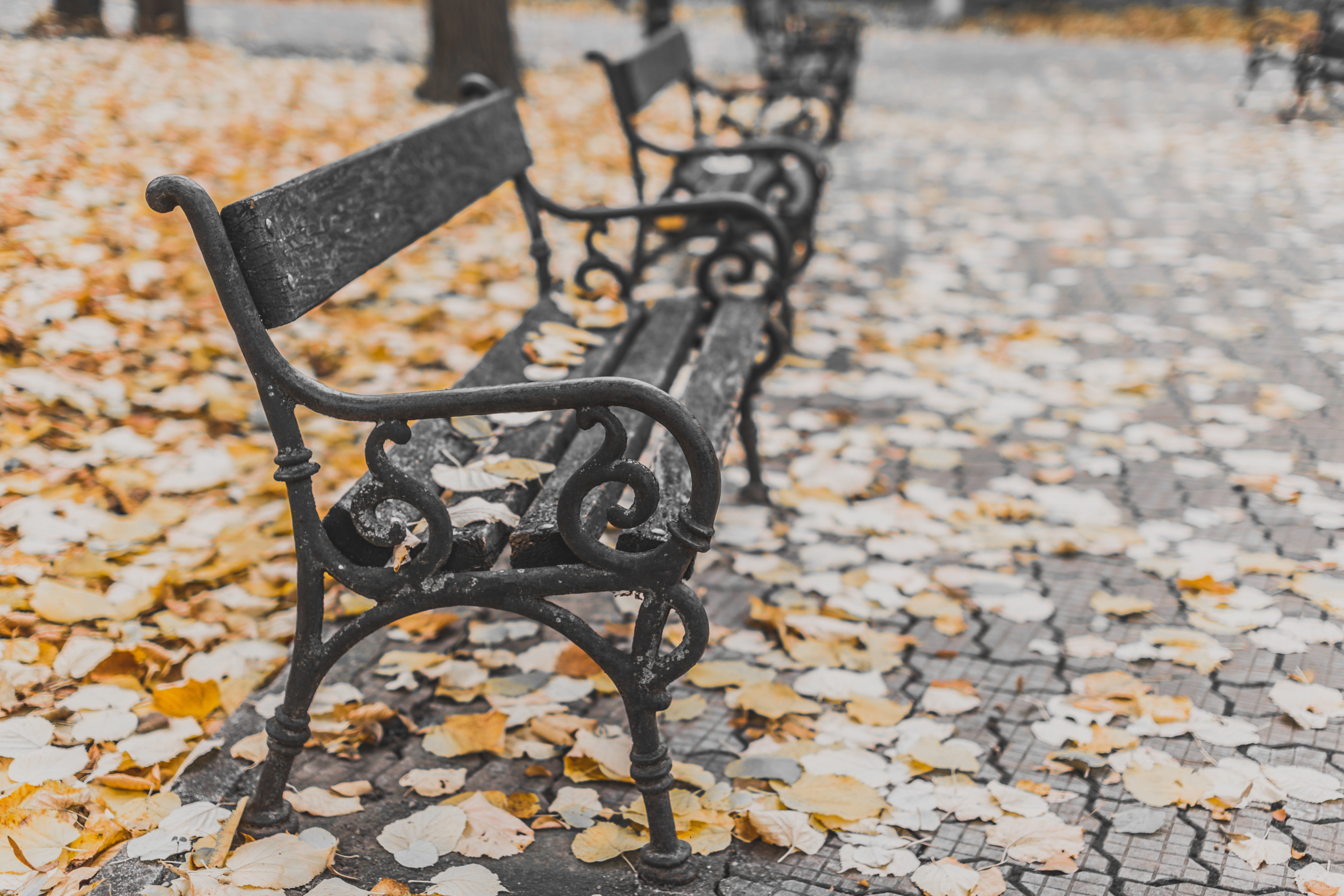 A row of park benches in Bucharest, each covered with autumn leaves