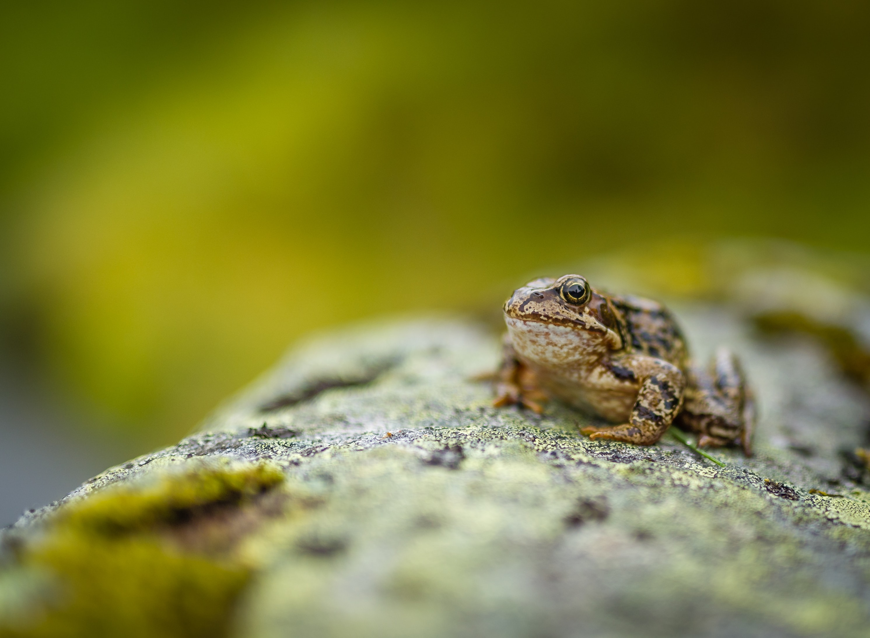 selective focus photo of toad on rock