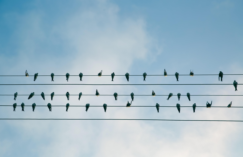 Bluebirds Reuniting stories