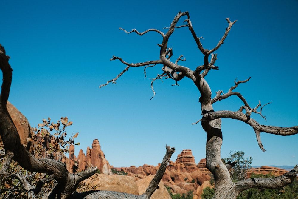 leafless tree near rock formation