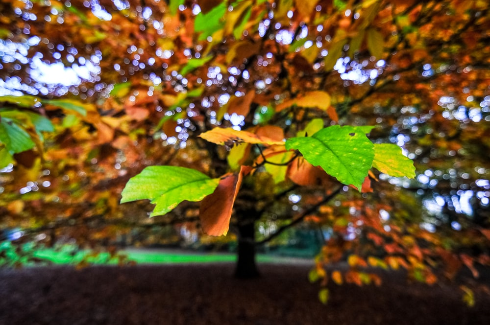 selective focus photography of green and brown tree