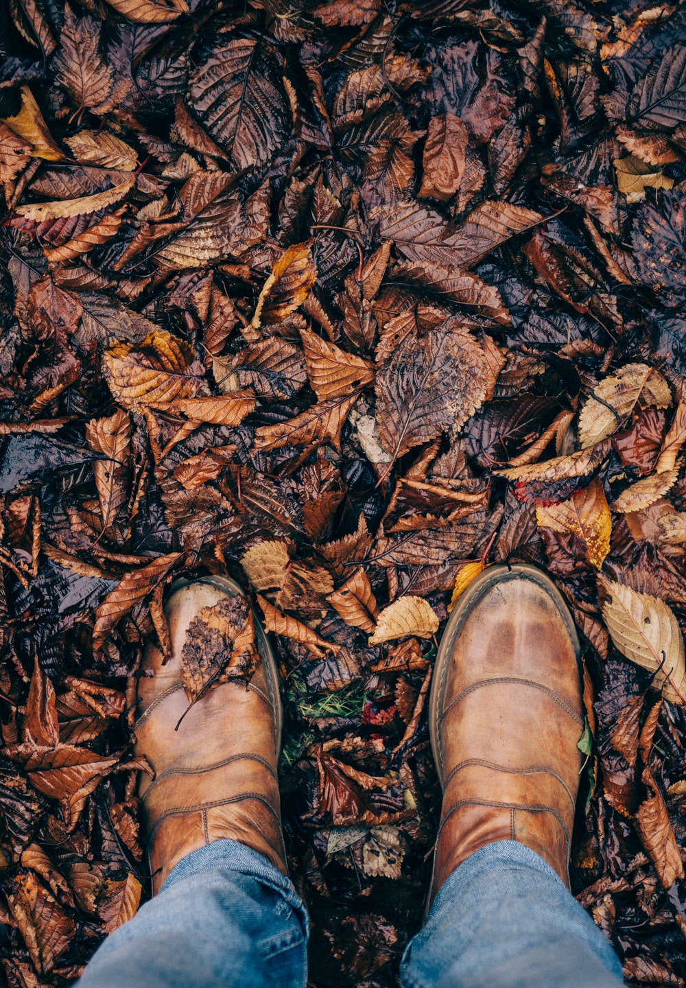 person stepping on dried leaves
