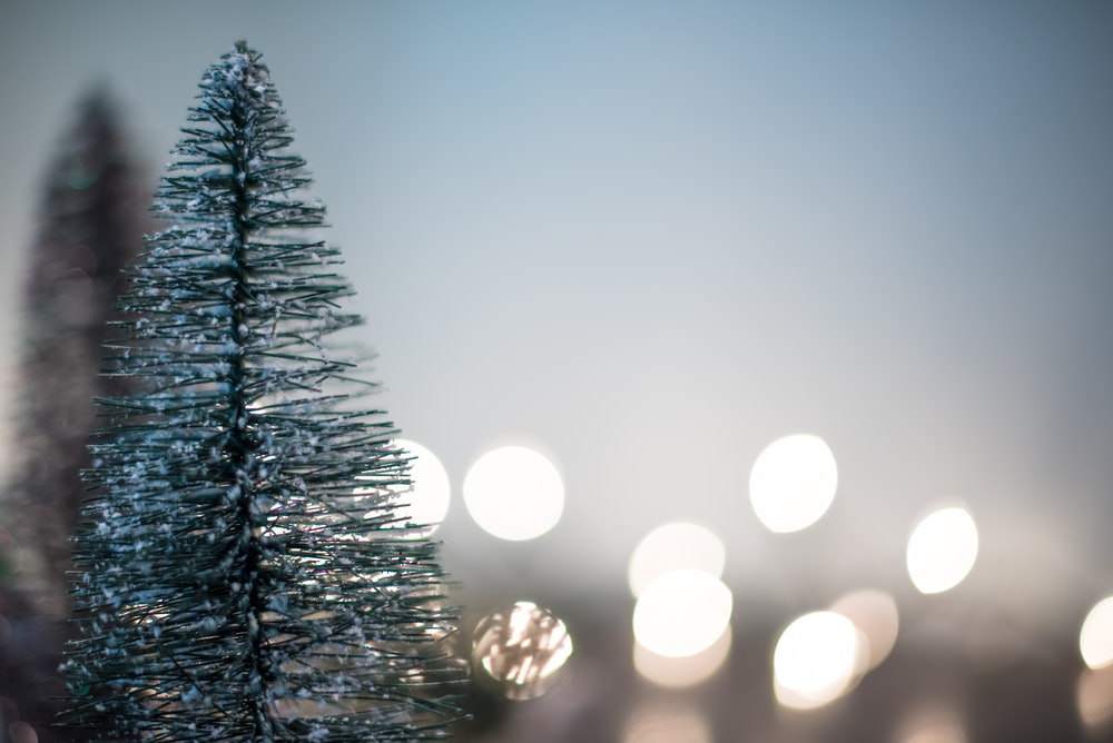 green Christmas tree with boke lights background