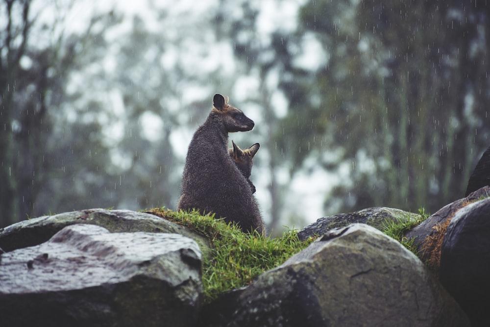 brown animal sitting on rock