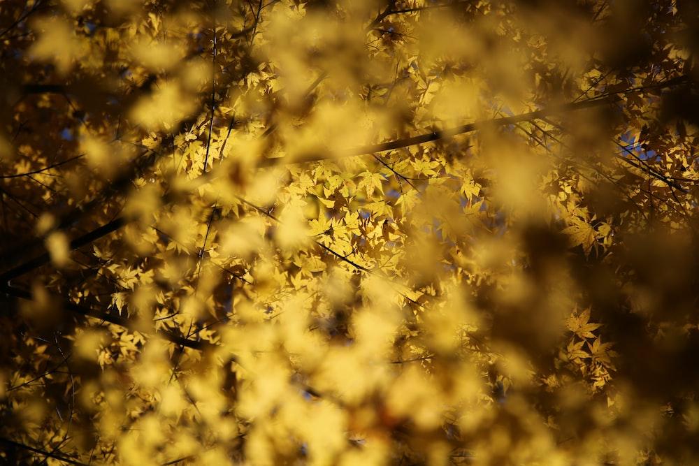 selective focus photo of yellow foliage tree