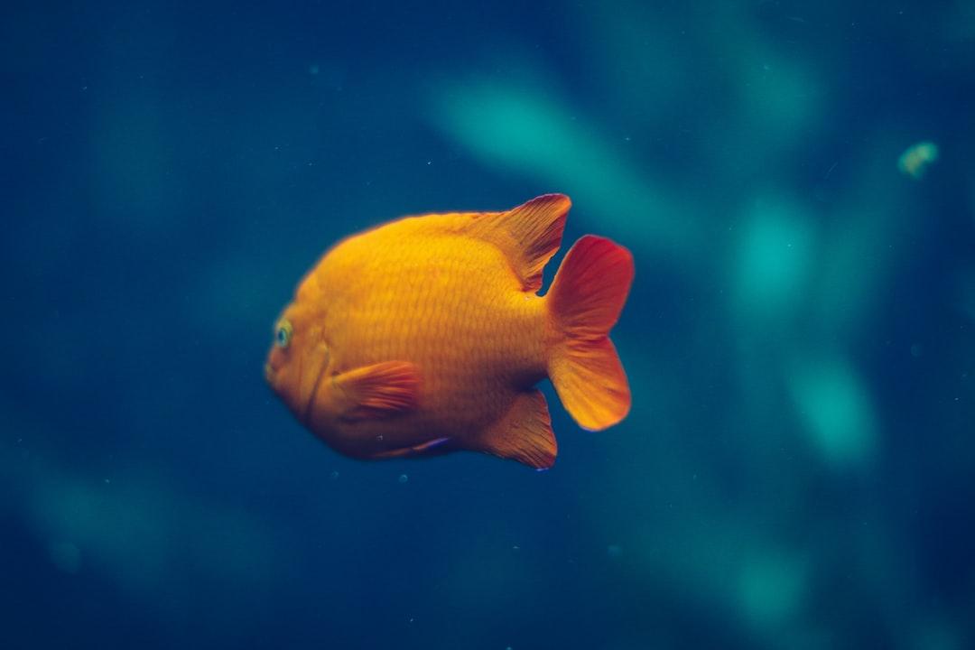 Here fishie fishie