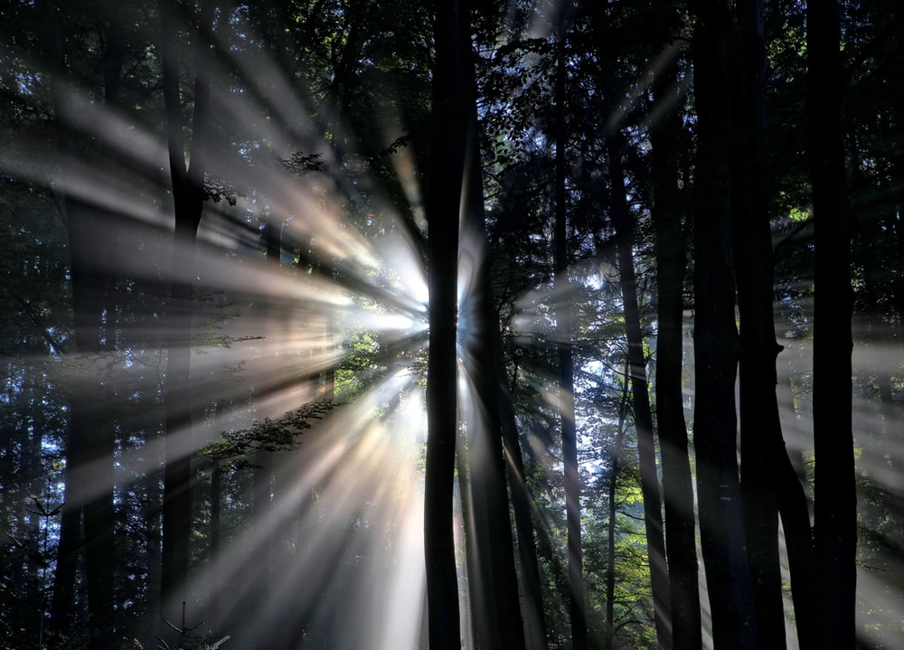 silhouette of trees with sun rays background